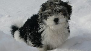 Max, våran fina hund